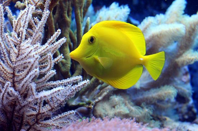 žlutá rybička.jpg
