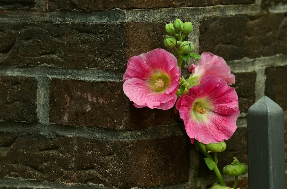 květina na cihlách